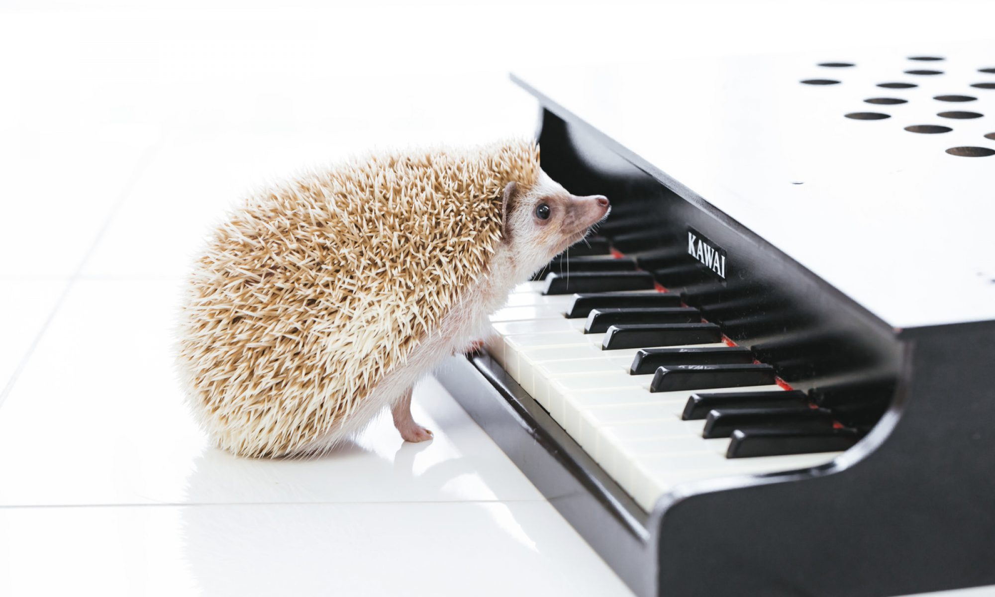 ピアノ & リトミック